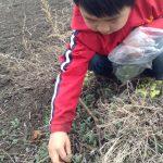 子どもと春の野草を摘もう!食べてみよう!