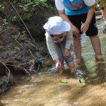 子どもの自然体験が減少している?子どもを育む森での遊び