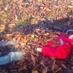 秋を感じる自然遊び
