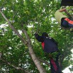 子供時代に木登りをさせよう!
